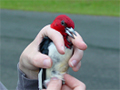 Woodpecker in hand